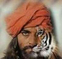 tigredemalasia